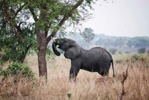 Kidepo Valley National Park Wildlife Viewing