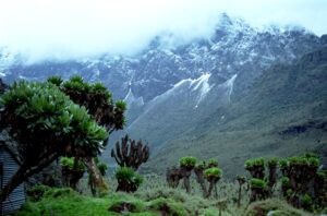 Mountain Rwenzori National Park