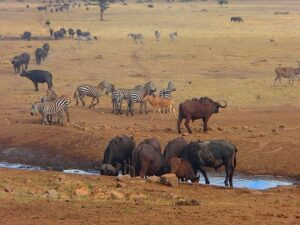 Tsavo West and East National Park